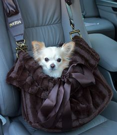 Pet Flys Dog Carrier Snuggle Bug by G. Little pet-supplies-qual. Dog Cave, Gato Animal, Dog Search, Gatos Cats, Chihuahua Love, Dog Carrier, Cat Supplies, Little Pets, Pet Carriers