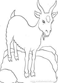 goat coloring pages google search