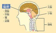 試してみたい!「うつ病、パニック障害、自律神経失調症」改善法。