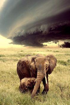 Elephant mum and baby on the Savannah