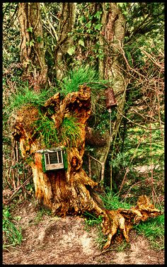 Hidden far into the forest there is a minikin woodsy house. It is camouflaged so well that often the Gnome family that live there, walk past it!