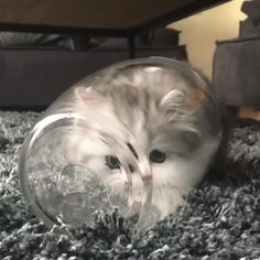 Kittens are well known as extremely amusing tiny balls of fluff. But their ability to fit anywhere is the (not so) secret ingredient that contributes to their