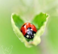 A heart for the little Ladybug..
