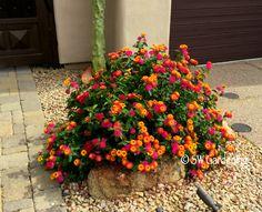 Attract Hummingbirds In the Desert Garden With These Summer-Blooming Beauties - Southwest Gardening