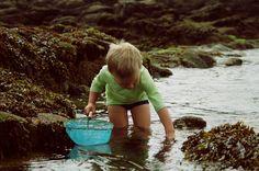 j'adore ! qu'est ce que serait la vie sans ça !!! Pêche à pied sur les rochers. Bretagne.