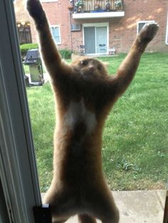 This cat who decided she would chase the butterfly up the screen door. | 27 Cats That Immediately Regret Their Decisions