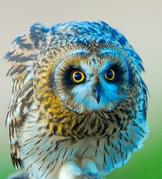 Marvelous owl.