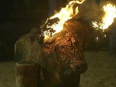 Why in the name of all that is holy would you set a bull on fire?