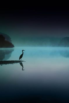 i-long-to-travel-the-world: ponderation: Silent Night by Robert Blair Beautiful Birds, Beautiful World, Beautiful Images, Beautiful Moon, Arte Bob Marley, Landscape Photography, Nature Photography, Silent Night, Belle Photo