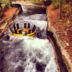 Busch Gardens January 2014 One brave soul on Congo River Rapids! #tampa #themepark #florida