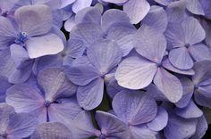 Resultado de imagem para fotografia macro  flores