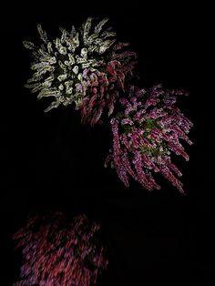 Flowerworks by Sarah Illenberger