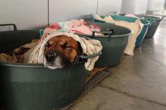 Posto de combustíveis acolhe cães de rua durante o inverno - Belas Mensagens