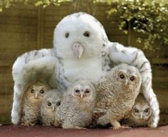 baby owls under toy mother owl