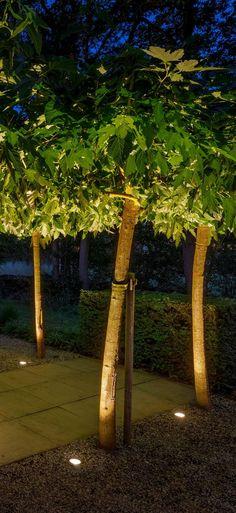Plant Lighting, Tree Lighting, Modern Landscape Design, Tree Designs, Lamp Light, Garden Design, Plants, Houses, Garten