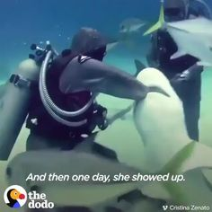 Funny Animal Videos, Cute Funny Animals, Cute Baby Animals, Funny Cute, Animals And Pets, Beautiful Creatures, Animals Beautiful, Shark Mouth, Tier Fotos