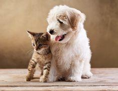 Pedigree Dogs, Cats, Kittens and Puppies for Sale Cute Puppies And Kittens, Funny Kittens, Cats And Kittens, Cute Cats, Dogs And Puppies, Friendly Dog Breeds, Kitten Wallpaper, Wallpaper Desktop, Funny Animals