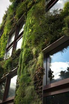 Murs avec plantes vertes