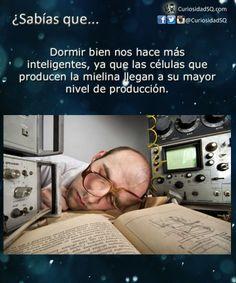 Dormir bien nos hace más inteligentes ~ ¿Sabías que?