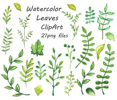 Watercolor leaves clipart,  watercolour clip art, hand painted, transparent background, leafs, floral clipart, Personal and Commercial Use by PassionPNGcreation on Etsy https://www.etsy.com/listing/214047123/watercolor-leaves-clipart-watercolour