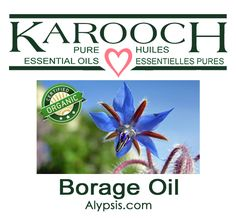 Borage is native to the Mediterranean region. The plant grows to a height of about 2 – 4 feet. The oil contains one of the highest amounts of gamma-linoleic acid (GLA), which is said to help slow down the skin's aging process. Diluting Essential Oils, Borage Oil, Aging Process, Carrier Oils, 16th Century, Purple Flowers, Aromatherapy, Cucumber
