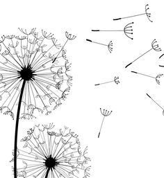 Dandelion Drawing, Dandelion Wall Art, White Dandelion, Wall Art Sets, Wall Art Prints, Halloween Drawings, Flower Doodles, Arte Floral, Black Decor