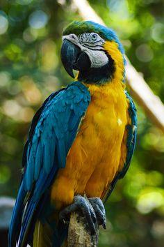 Macaw by Joel Villarroel