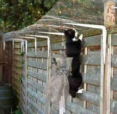 Exactly what I plan on doing in my yard! Dog Proof Fence, Cat Fence, Outside Cat Enclosure, Cat Habitat, Living With Cats, Cat Cages, Cat Run, Cat Playground, Cat Garden
