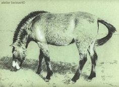 Das Przewalski-Pferd Kohle, Kreide auf Tonpapier, 300x410mm, Leipzig 2015