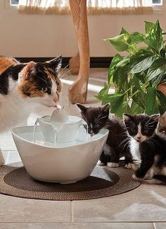 Drinkwell Lotus Cat Fountain Kylie at Kindred Kitties would love this I Love Cats, Crazy Cats, Cool Cats, Gato Calico, Pet Water Fountain, Drinking Fountain, Gatos Cool, Cat Drinking, Drinking Water