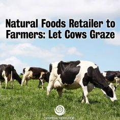 That's the position of a Colorado-based grocery store chain that recently announced it will carry only dairy products from farms where cows graze in pastures. More here: http://www.cornucopia.org/2014/05/natural-foods-retailer-farmers-let-cows-graze #grassfed #dairy #animalwelfare