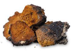 Several pieces of chopped chaga (Inonotus obliquus)