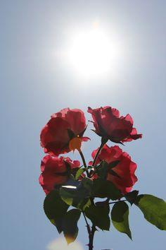 flores y rosas - Site Title Tumblr Wallpaper, Cute Wallpaper Backgrounds, Aesthetic Iphone Wallpaper, Flower Wallpaper, Aesthetic Wallpapers, Screen Wallpaper, Phone Backgrounds, Flowers Nature, Beautiful Flowers