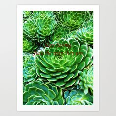 "Looking at these beautiful green cactus plants, make me feeling great and refreshing. Just like they are telling me to: ""Always Stay Strong"", ""Always Be Strong"", just they way they are. #photography #cactus #nature #naturephotography #green #greenart #greendecor @society6 #artprints #officedecoratingideas #plantsphotography #inspirationalquotes #lifequotes #cactusplants #cactusprints #cactusphotography"