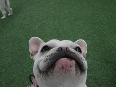 She prefers the little dog side of the dog park :) - Imgur