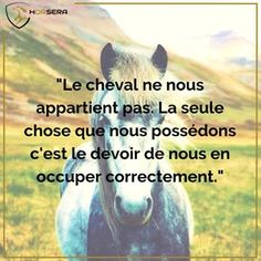 'Cause he is the representation if freedom ❤️ 'Cause he is the representation if freedom ❤️ - Art Of Equitation Equestrian Quotes, Types Of Horses, Horse World, Horse Quotes, Tour Eiffel, Horse Tack, Horseback Riding, Horse Riding, Love Of My Life