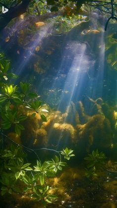 A mangrove forest near Palau ~ Photo Credit: WaterImage/Alamy
