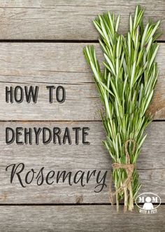 Rosemary is a great evergreen herb that you can harvest all year long. But if your plant hasn't reached gargantuan sizes, yet, or if you aren't able to grow it, you can dehydrate it to have in your pantry all year! Evergreen Herbs, How To Dry Rosemary, Rosemary Herb, Uses For Rosemary, Rosemary Ideas, Rosemary Recipes, Herbs For Health, Dehydrator Recipes, Gardens