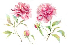 Check out Watercolor peonies flower by Astromonkey on Creative Market