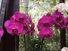 Az egyik legelterjedtebb ajándék napjainkban a cserepes virág, ezek közül is leginkább az orchidea. Ha nem szeretnél vágott virágot ajándékozni, akkor lepd meg kedvenc barátnődet egy cserép orchideával. Ezzel egészen biztosan nem fogsz mellé!        Lásd el Garden Plants, Orchids, Wedding, Gardening, Plant, Valentines Day Weddings, Weddings, Garten, Lilies