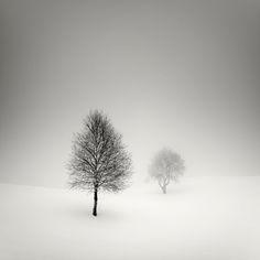 winter trees - pierre pellegrini