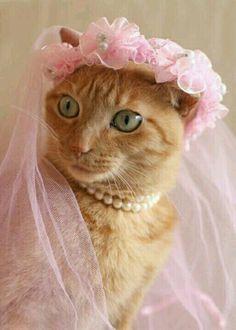 Je me marie