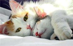 .Sweet momma & her kitten.