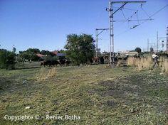 "Koppies Railwaystation  ""Only in South Africa""  Copyright © ~ Renier Botha"