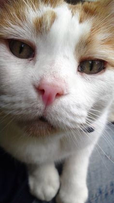 """Original Pinner: """"Ollie; he was one of the best little cats in the world ♥♥♥"""" He looks very sweet!"""