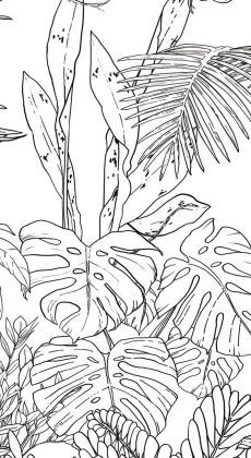 Jungle Tropical Black & White Wallpaper for Ohmywall created by the Caddous & Alvarez artists duo in the spirit of a mural. Their drawings, imagined and traced to four . Jungle Drawing, Nature Drawing, Plant Drawing, Wall Drawing, Tropical Wallpaper, Nature Wallpaper, Jungle Wallpaper, Art Mural, Wall Murals