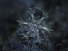Snowflake macro: starlight by ChaoticMind75, via Flickr