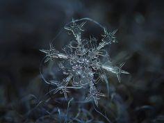 Snowflake macro photo: Starlight