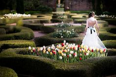 Latham Gardens, Tryon Palace  Photo from Neala's Bridal Session collection by Traci Arney Photography