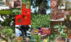 Medicinal Rice based Tribal Medicines for Diabetes Complications and Metabolic Disorders (TH Group-610) from Pankaj Oudhia's Medicinal Plant Database